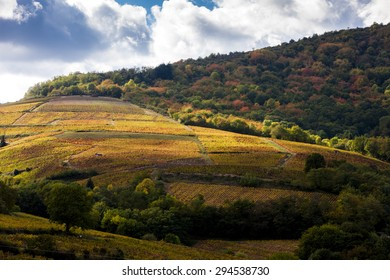 vineyards near Odenas, Beaujolais, Rhone-Alpes, France