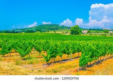 Vineyards near Roussillon village in France