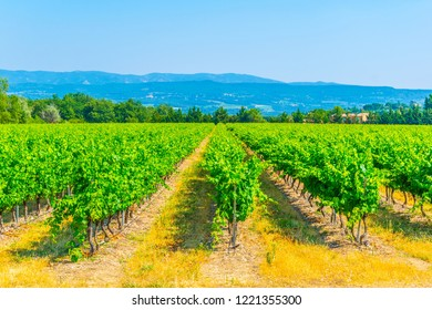 Vineyards near Roussillon village in France