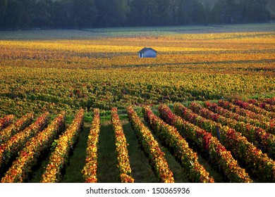 vineyards near Savigny-les-Beaune, Burgundy