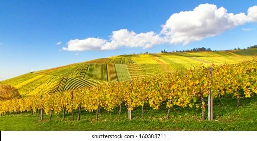 Vineyards near Stuttgart, Weinstadt, Schnait