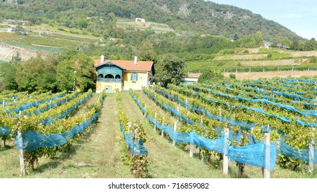 Vineyards with a nice house in volcanic hill Badacsony, Hungary