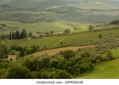 Vineyards and olive groves on the hillsides surrounding Barberino Val d'Elsa in Tuscany Italy.