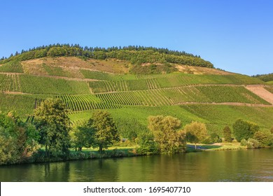 Vineyards on the banks of the Moselle river in aautumn, Germany