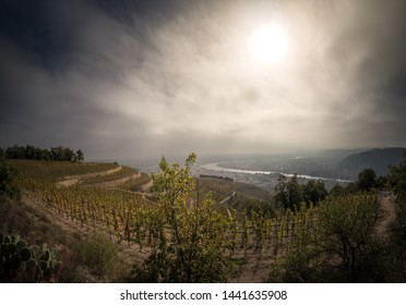 vineyards on the hermitage hill in the rhone valley