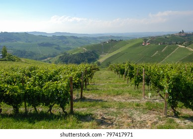 Vineyards on the hills of the Langhe, Piedmont - Italy
