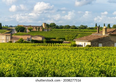 Vineyards on the hills of Saint-Emilion, Gironde, Nouvelle Aquitaine, France