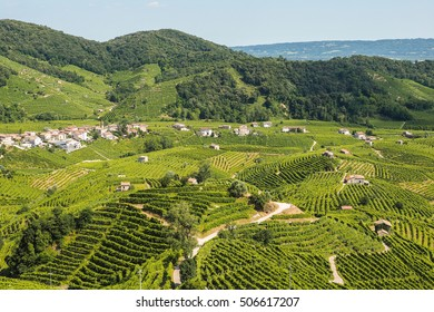 Vineyards on the hills of Valdobbiadene, production zone of sparkling prosecco wine