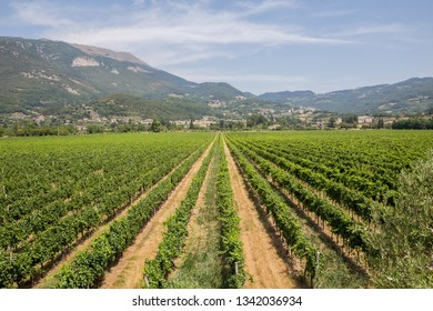 Vineyards on the hills of Valpolicella