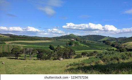 Vineyards on Waiheke Island in Auckland, New Zealand