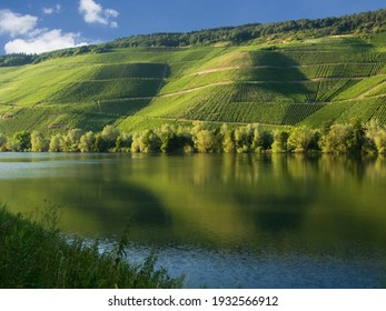 Vineyards over the river Moselle near the town of Bernkastel-Kues, Germany, on a sunny summer day. The steep slopes above the river give great white wine.