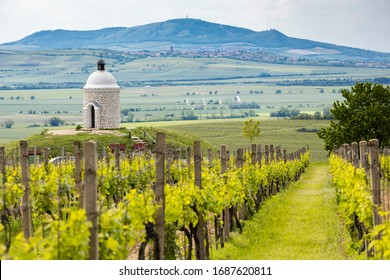 Vineyards, Palava region, South Moravia, Czech Republic