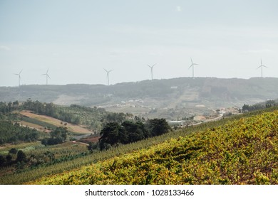 Vineyards of Portugal