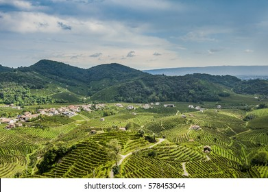 Vineyards of prosecco, Valdobbiadene, Veneto, Italy