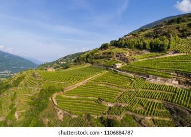 Vineyards, Province of Sondrio, Valtellina. Aerial shot