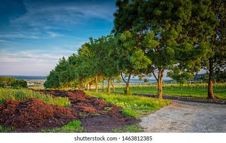 Vineyards in Villány region, Hungary