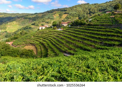Vineyards of the Ribeira Sacra, Lugo, Spain