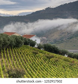 Vineyards of the River Douro region in Portugal. Viticulture in the Portuguese village