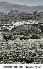 Vineyards of the River Douro region in Portugal. Viticulture in the Portuguese village. Black and white photo