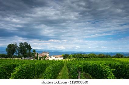 Vineyards and romanesque church on the Lake Garda