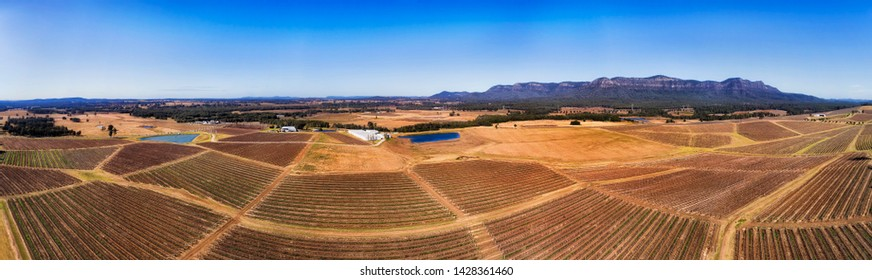 Vineyards with rows of growing vines in Hunter Valley wine making region of Australia - wide aerial panorama over cultivated hillsides and farm fields.