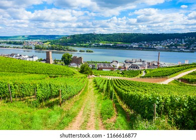 Vineyards, Rudesheim am Rhein and Bingen am Rhein town aerial panoramic view in the Rhine Valley, Germany