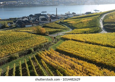 Vineyards of Ruedesheim in Germany with Rhein River. A panoramic view from within the vineyards of Ruedesheim am Rhein in Germany with the Rhein river in the background.