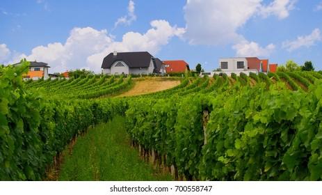 Vineyards in rural Burgenland. Mörbisch am See, Austria.