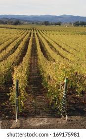 Vineyards in Russian River Valley, CA