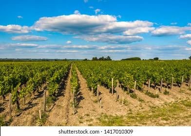 Vineyards of Saint Emilion, Bordeaux, France