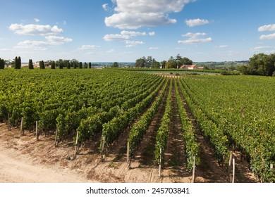 Vineyards of Saint Emilion, Bordeaux in France
