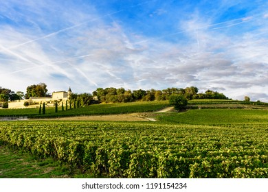 Vineyards of Saint Emilion, Bordeaux Wine yards in France in a sunny day