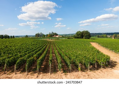 Vineyards of Saint Emilion in France, sunny day