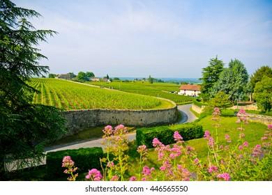 Vineyards of Saint-Emilion