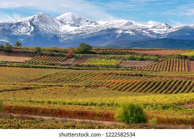 Vineyards with San Lorenzo mountain as background, La Rioja, Spain