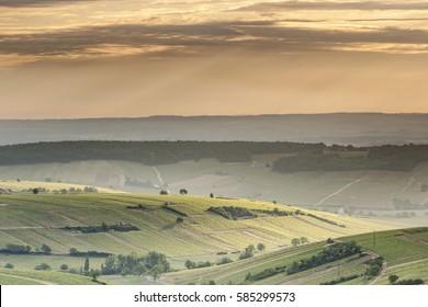 The vineyards of Sancerre at dawn.