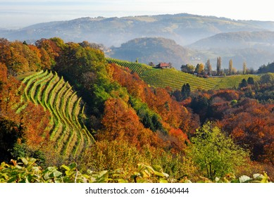 vineyards in South Styria, Styria, Austria