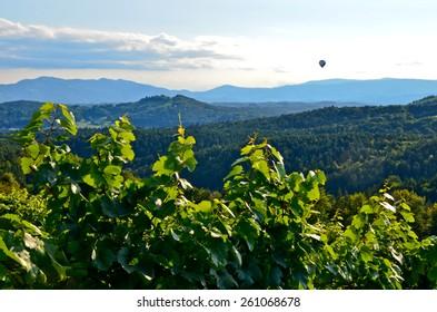 Vineyards in Southern Styria near Gamlitz, Austria