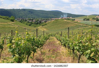 Vineyards of the Southern Wine Route in Germany