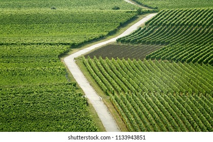 vineyards in summer