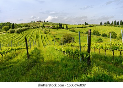 Vineyards in a sunny morning in Tuscany (Italy)
