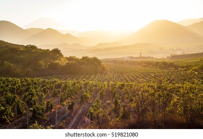The vineyards at sunset