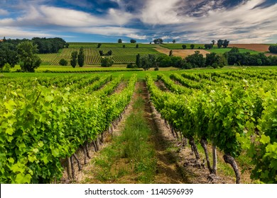 Vineyards at sunset with beautiful light. Gascony, France
