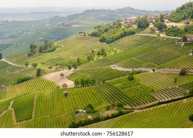 Vineyards surrounding La Morra town near Alba, Piedmont, production zone of Barolo, Barbaresco and Nebbiolo