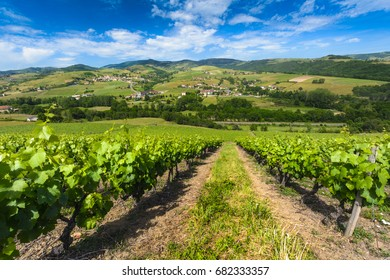 Vineyards of Ternand and Letra villages in Beaujolais in France in Beaujolais in France