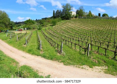 Vineyards in Tuscany - rural Italy. Agricultural area in the province of Siena.