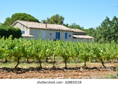 Vineyards and a typical provencal house in Provence, France