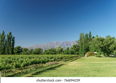 Vineyards in the Uco Valley of Mendoza, Argentina