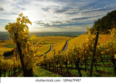 Vineyards in under franconia close to kitzingen (Schwanberg, Rödelsee)