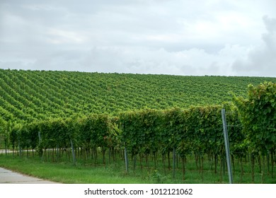 Vineyards under an overcast sky in the Palatinate border region between Germany and France.